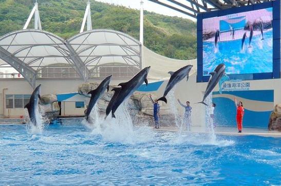 花蓮必遊景點-海豚秀