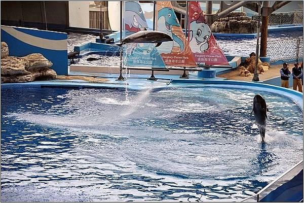 花蓮打卡景點-海豚表演秀