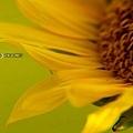 DSC08865_800.jpg