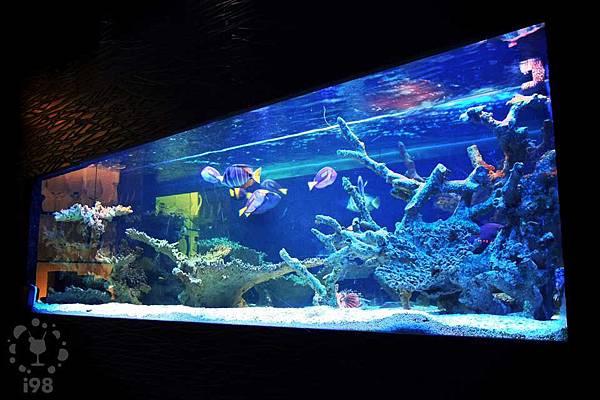 絢麗的藍色水族箱