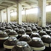 窖藏的五公石原窖高粱酒