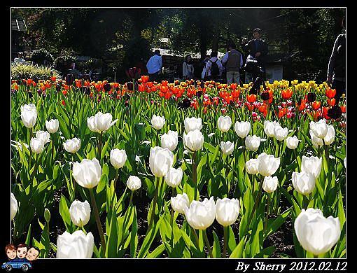 20120212_桃源仙谷039.jpg