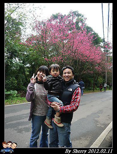 20120211滬尾櫻花大道13.jpg