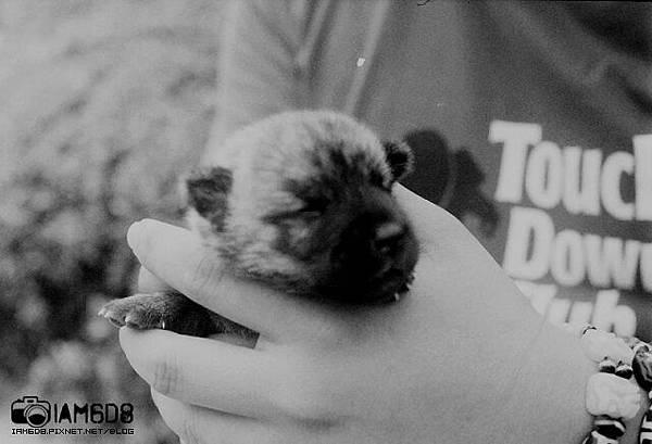 小老鼠。毛茸茸的孩提時期