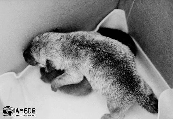 小老鼠和多多。毛茸茸的孩提時期