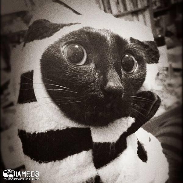 熊貓look