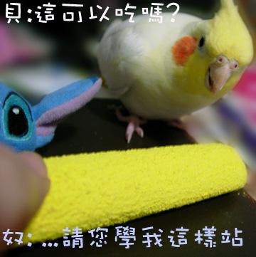polly's超輕感美趾棲木 (1).jpg