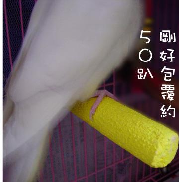 polly's超輕感美趾棲木 (2).jpg