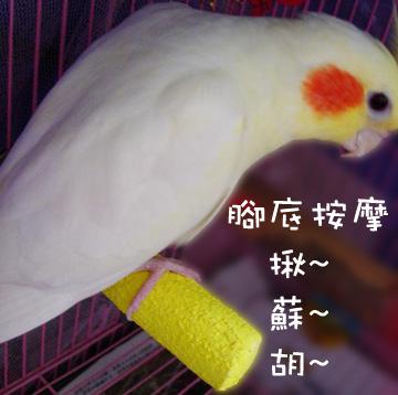 polly's超輕感美趾棲木 (4).jpg