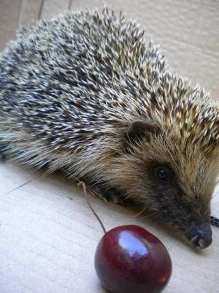 20100105-hedgehog2.JPG