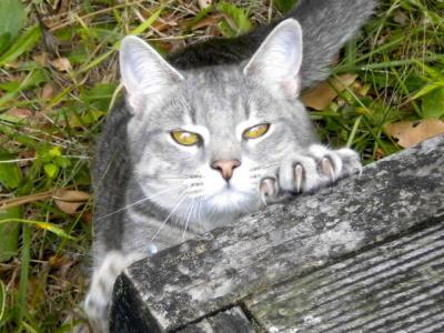 20100110goodcat.JPG