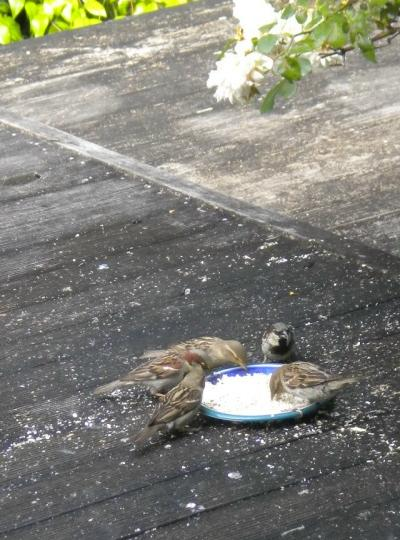 20091230-bird4.JPG