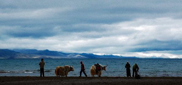 湖畔犛牛.jpg