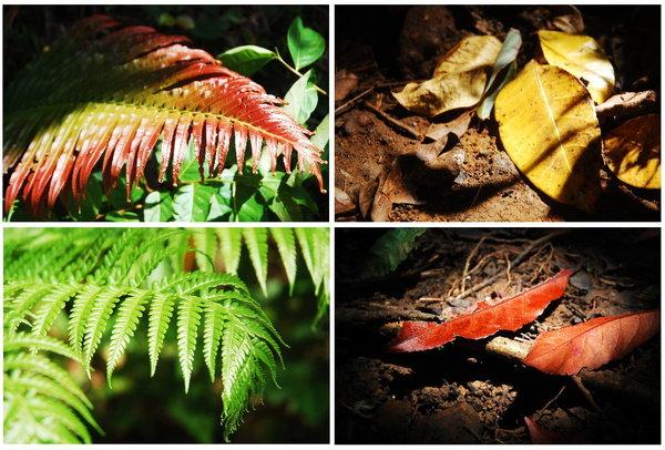 天池植物.jpg