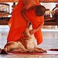 僧侶與小狗.JPG