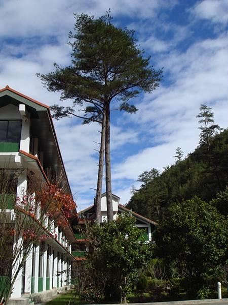 到處都是這麼高的樹哦!好美!