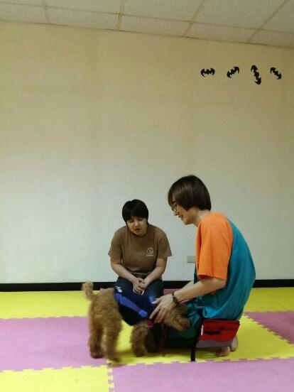 dingo-201306005-1