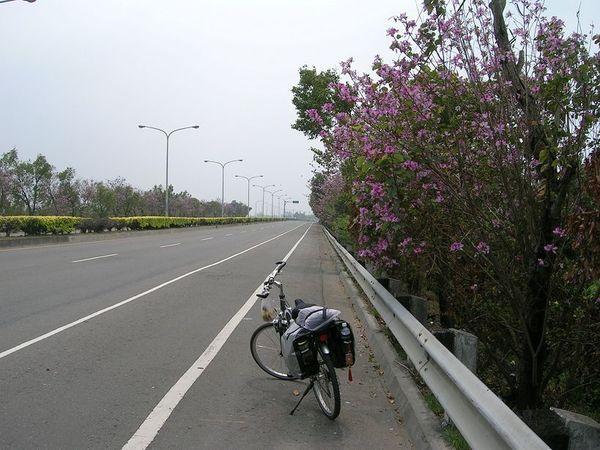 又是一望無際的公路,雖然路邊有美美的花,但無際於事。