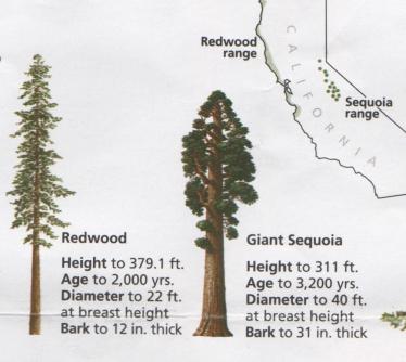 01-46-redwood-sequoia
