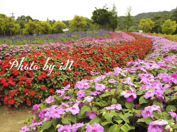 富田花園農場_花海.JPG