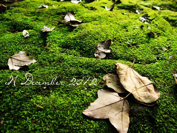 December_fall