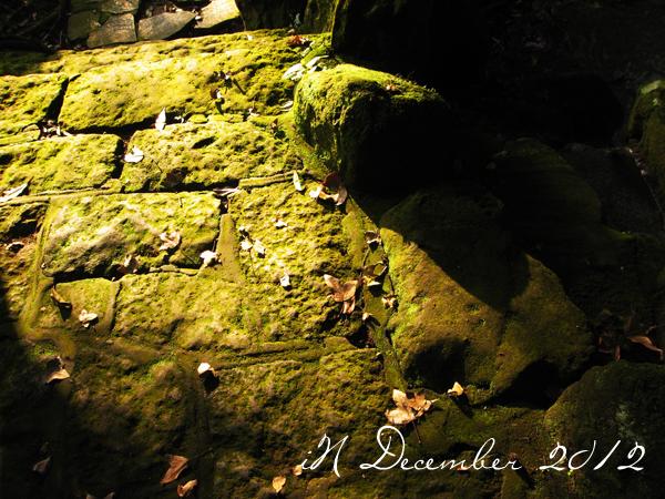 December_spotlight