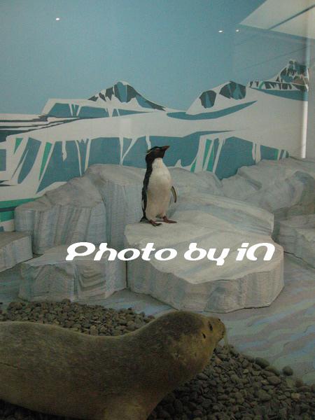企鵝與海豹.JPG