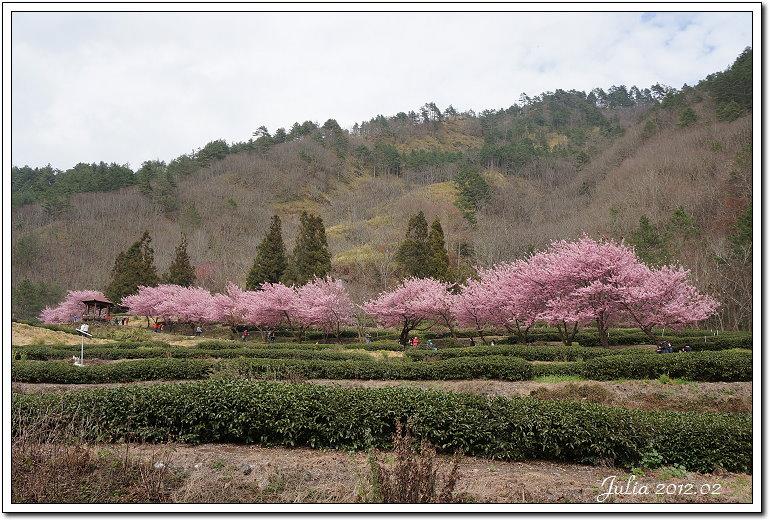 武陵農場 (27)