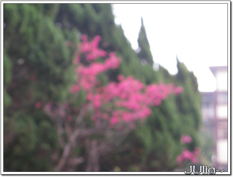 山櫻花 (4).jpg