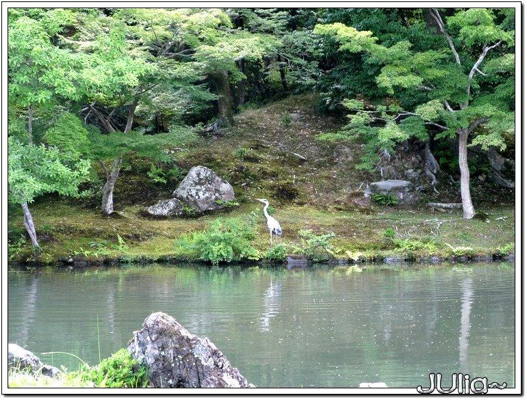 (嵐山)天龍寺 (12).jpg