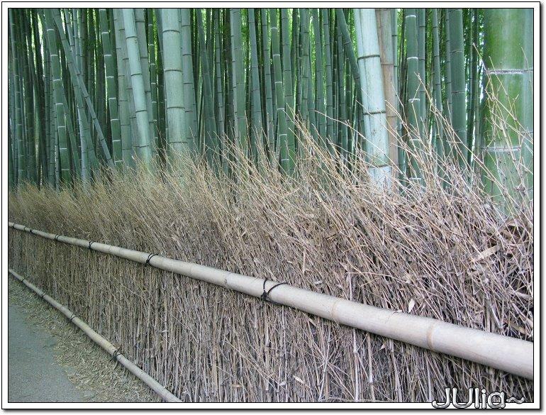 (嵐山)竹林步道 (2).jpg