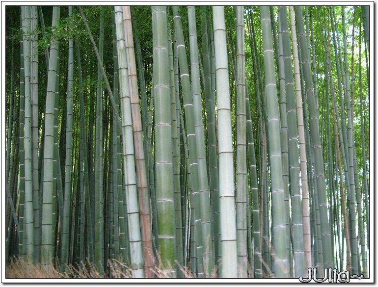 (嵐山)竹林步道 (5).jpg