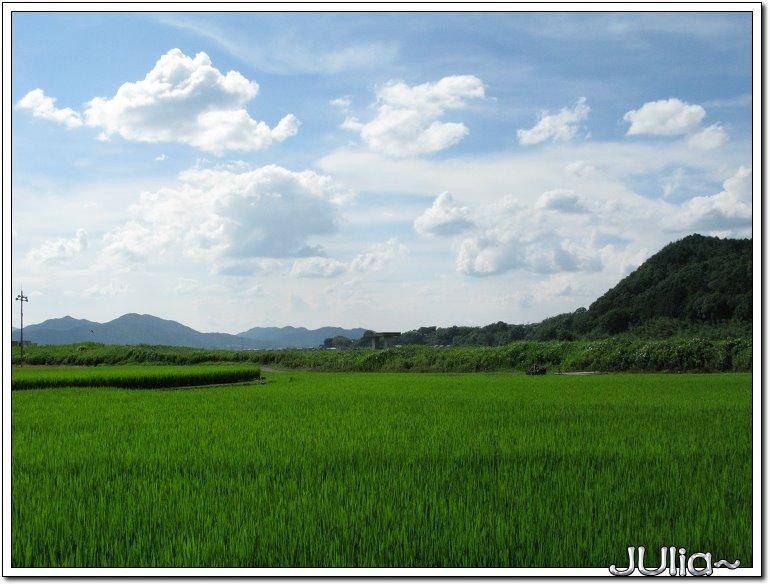 (嵐山)觀光小火車 (5).jpg
