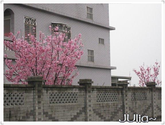 也是。櫻花。 (1).jpg
