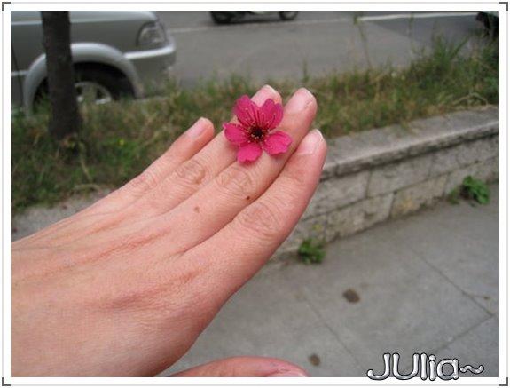 也是。櫻花。 (6).jpg