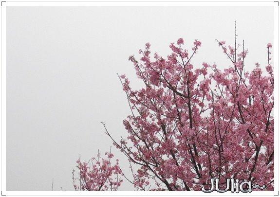 也是。櫻花。 (7).jpg