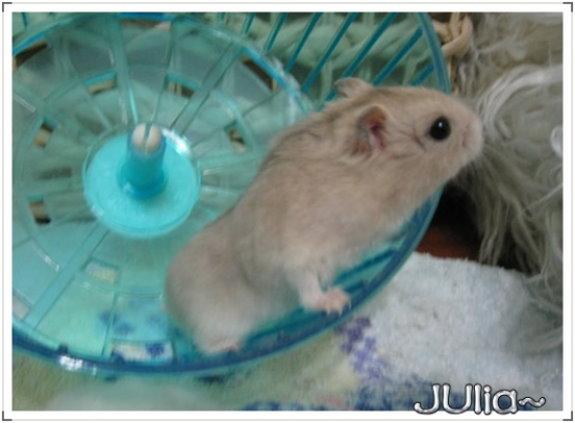布丁鼠。醜醜 (4).jpg