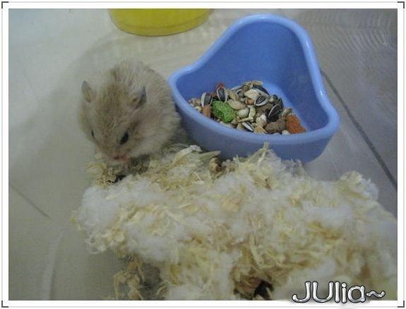 071126新來的布丁鼠.jpg