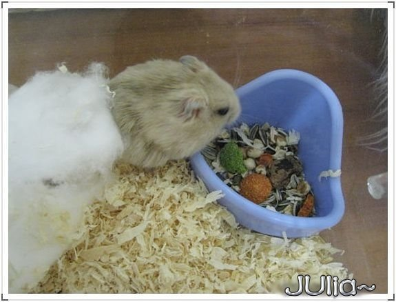 071126新來的布丁鼠 (6).jpg