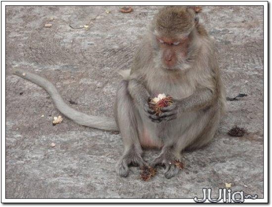 (泰國)猴山.jpg