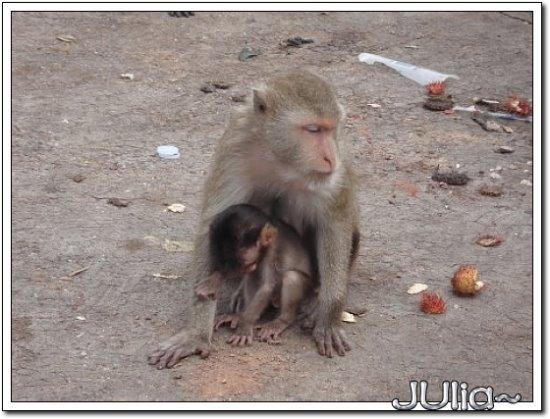 (泰國)猴山 (1).jpg
