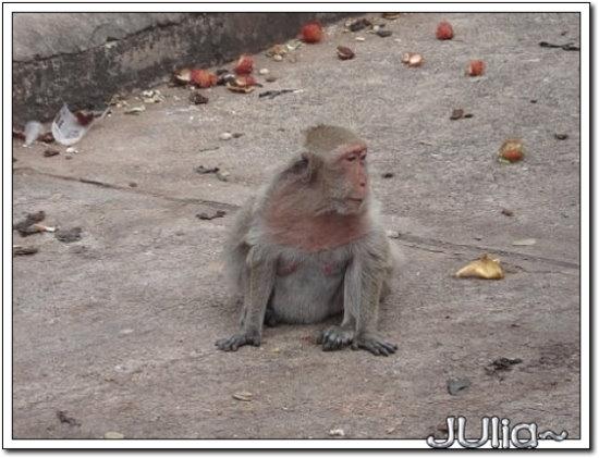 (泰國)猴山 (2).jpg