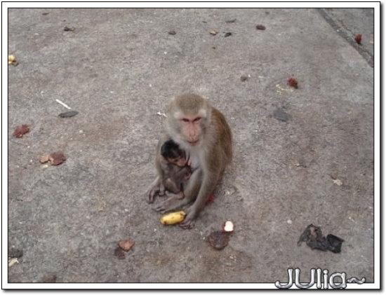 (泰國)猴山 (4).jpg