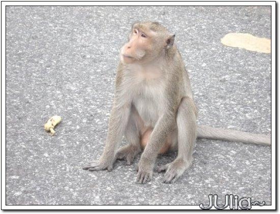 (泰國)猴山 (6).jpg