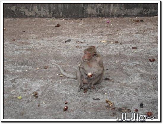 (泰國)猴山 (7).jpg