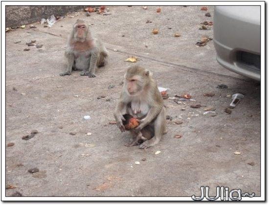 (泰國)猴山 (8).jpg