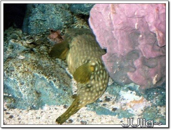 (泰國)海洋水族館.jpg
