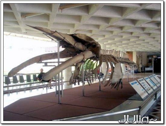 (泰國)海洋水族館 (3).jpg