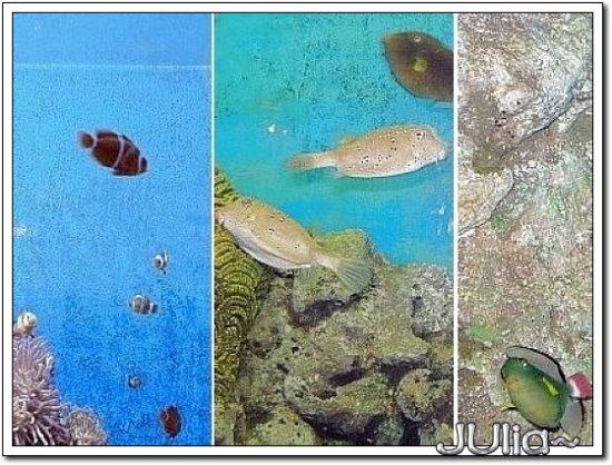 (泰國)海洋水族館 (5).jpg