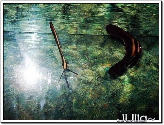 (泰國)海洋水族館 (8).jpg
